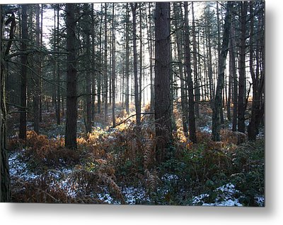 Metal Print featuring the photograph First Fall Of Snow On Cannock Chase by Jean Walker