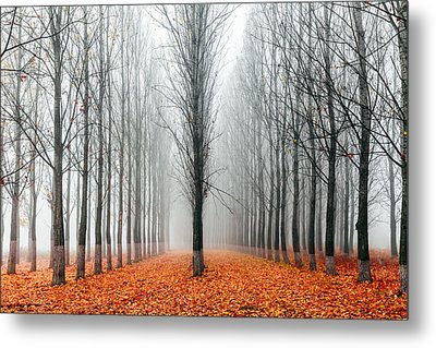 First In The Line Metal Print by Evgeni Dinev