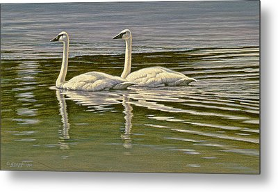 First Open Water - Trumpeters Metal Print