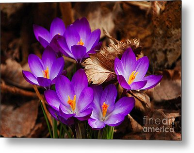 First Signs Of Spring Metal Print by Elaine Manley