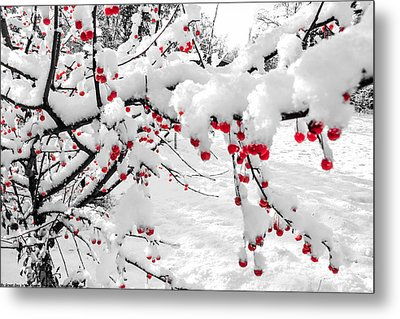 First Snow Metal Print by Michelle and John Ressler