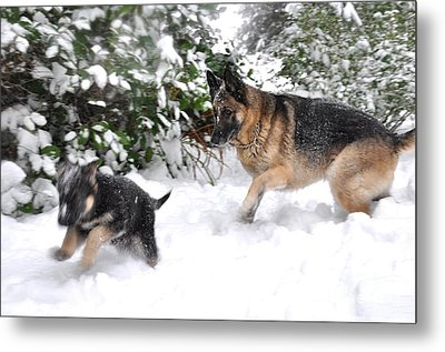 Metal Print featuring the photograph First Snow by Tanya  Searcy