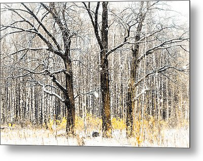 First Snow. Tree Brothers Metal Print by Jenny Rainbow