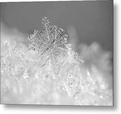 First Snowflake Metal Print