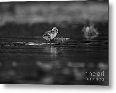 Metal Print featuring the photograph   First Steps by John F Tsumas
