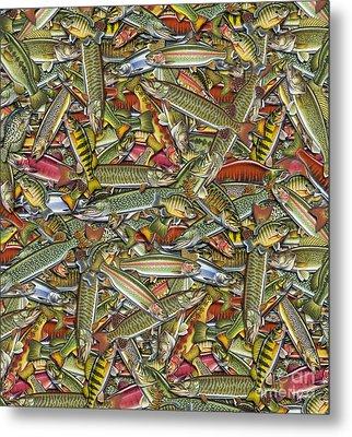 Fish Bedding Metal Print by Jon Q Wright