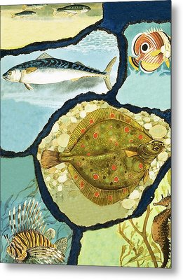 Fish Metal Print by English School