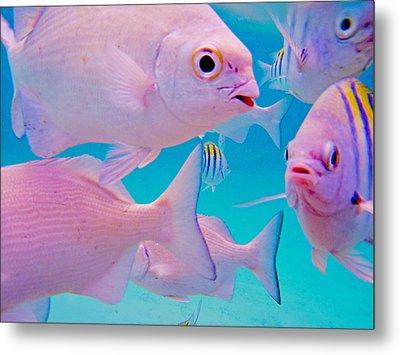 Fish Frenzy Metal Print by Carey Chen