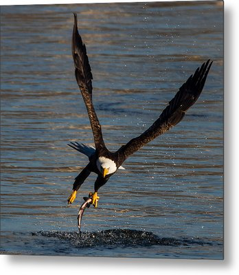 Fish Hook Metal Print by Glenn Lawrence