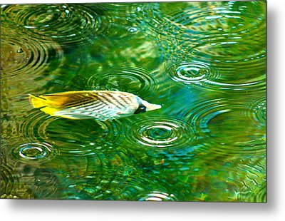 Fish In The Rain Metal Print
