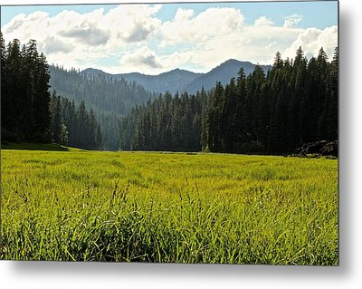 Fish Lake - Open Field Metal Print by Laddie Halupa