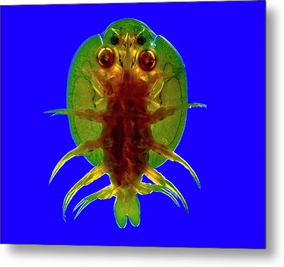 Fish Louse Metal Print by Dr Keith Wheeler