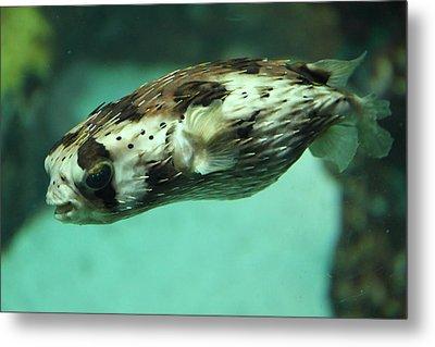 Fish - National Aquarium In Baltimore Md - 1212137 Metal Print by DC Photographer