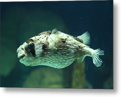 Fish - National Aquarium In Baltimore Md - 1212138 Metal Print by DC Photographer
