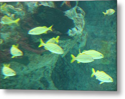 Fish - National Aquarium In Baltimore Md - 1212141 Metal Print by DC Photographer