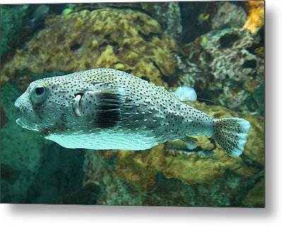 Fish - National Aquarium In Baltimore Md - 1212142 Metal Print by DC Photographer