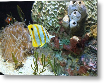 Fish - National Aquarium In Baltimore Md - 121223 Metal Print by DC Photographer