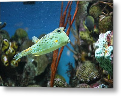 Fish - National Aquarium In Baltimore Md - 121233 Metal Print by DC Photographer