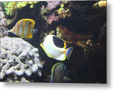 Fish - National Aquarium In Baltimore Md - 121239 Metal Print by DC Photographer