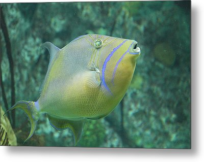 Fish - National Aquarium In Baltimore Md - 121257 Metal Print by DC Photographer