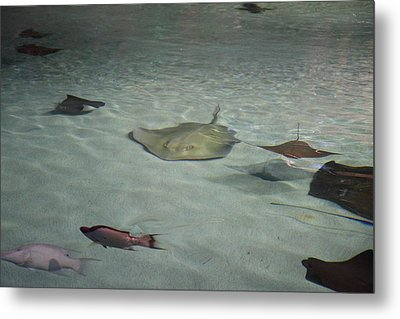 Fish - National Aquarium In Baltimore Md - 121270 Metal Print by DC Photographer
