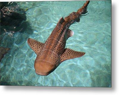 Fish - National Aquarium In Baltimore Md - 121281 Metal Print