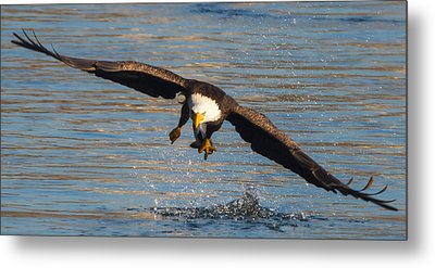 Fish On The Go  Metal Print by Glenn Lawrence