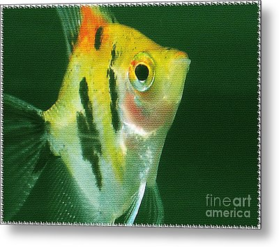 Metal Print featuring the photograph Fish Out Of Water by Nina Silver