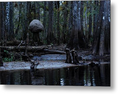 Fisheating Creek 26 Metal Print by Carol Kay