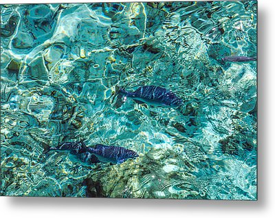 Fishes In The Clear Water. Maldives Metal Print by Jenny Rainbow