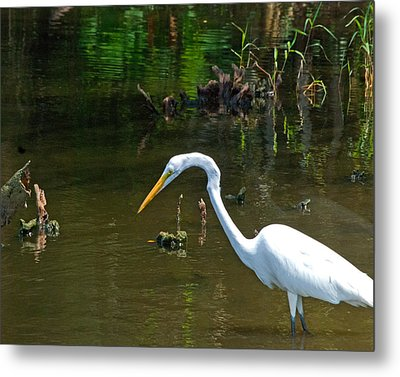 Fishing For Food Wil 368 Metal Print