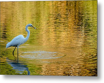 Fishing Metal Print by Wade Brooks