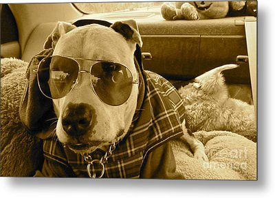 Fix My Sunglasses.... Metal Print by Q's House of Art ArtandFinePhotography