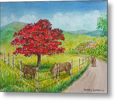 Flamboyan And Cows In Western Puerto Rico Metal Print
