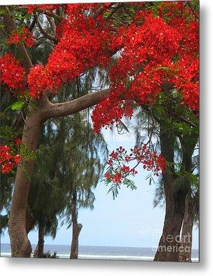 Flamboyant - Ile De La Reunion - Reunion Island Metal Print by Francoise Leandre