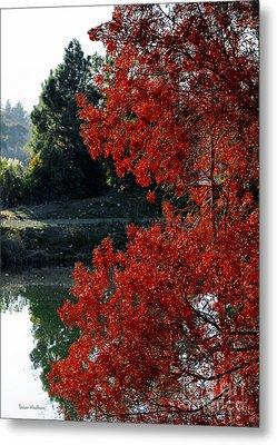 Flame Red Tree Metal Print by Susan Wiedmann
