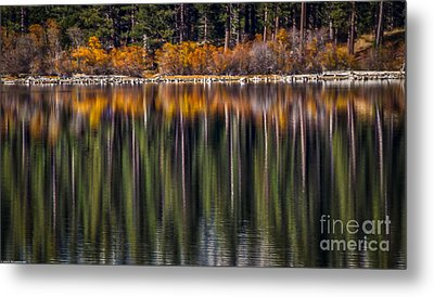 Flames Of Autumn Metal Print by Mitch Shindelbower