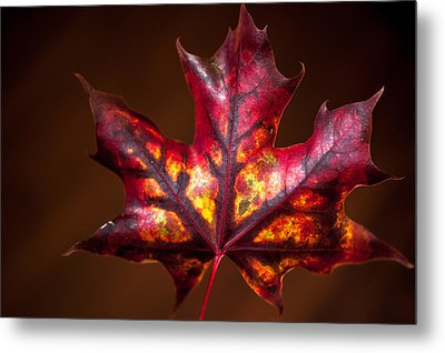 Metal Print featuring the photograph Flaming Red  by Crystal Hoeveler