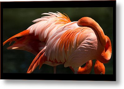 Flamingo Abyss Metal Print by John Kunze