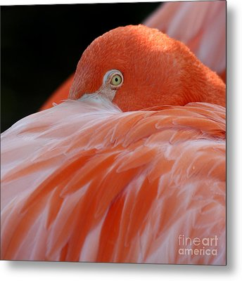 Metal Print featuring the photograph Flamingo At Rest. by Bob and Jan Shriner