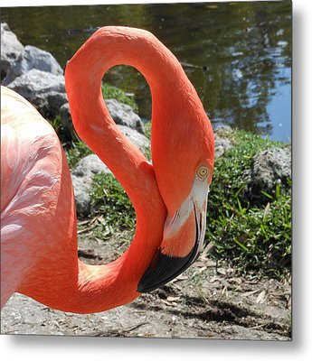 Flamingo By The Pond Metal Print by Kay Gilley