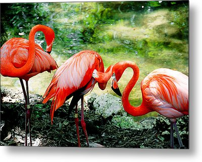 Flamingo Friends Metal Print