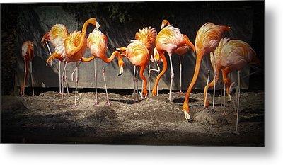 Flamingo Hangout Metal Print