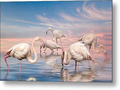 Metal Print featuring the photograph Flamingo Lagoon by Brian Tarr