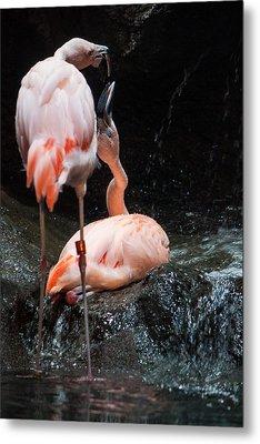 Flamingo Love Metal Print by Mike Lee