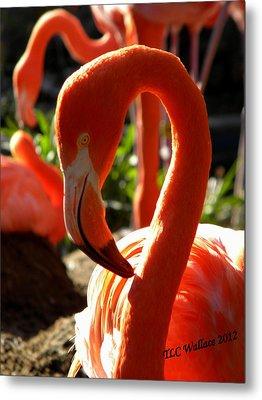 Flamingo Metal Print by Tammy Wallace
