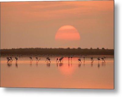 Flamingos At Sunrise Metal Print