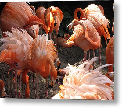 Metal Print featuring the photograph Flamingos by Beth Vincent