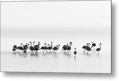 Flamingos Metal Print by Joan Gil Raga