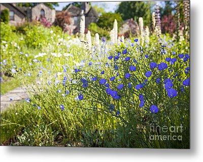 Flax Flowers In Summer Garden Metal Print by Elena Elisseeva